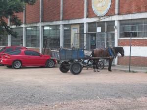 Working Horse that picks up trash